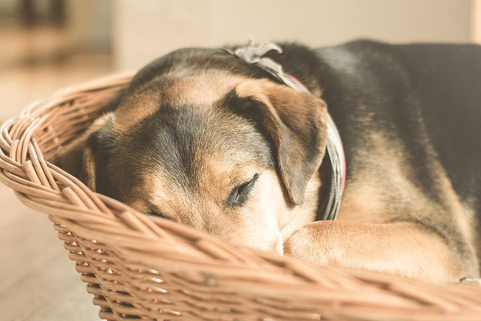 Een hondenmand geeft een gevoel van thuis