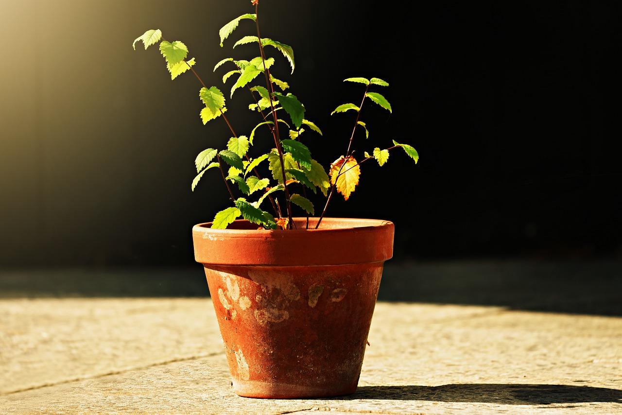 Je tuin, balkon of huiskamer opleuken met bloemen?